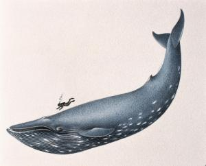 diving with blue whale