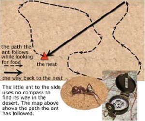 21compass_ant