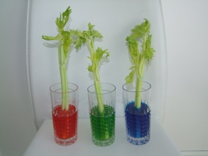 Science-Craft-Celery-Food-Coloring-Experiment-for-kids