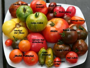 Heirloom-Tomatoes-from-Market-with-names